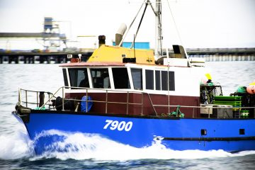 Southland has a long established fishing industry