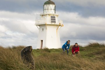 Get up close to wildlife at Waipapa Point in The Catlins