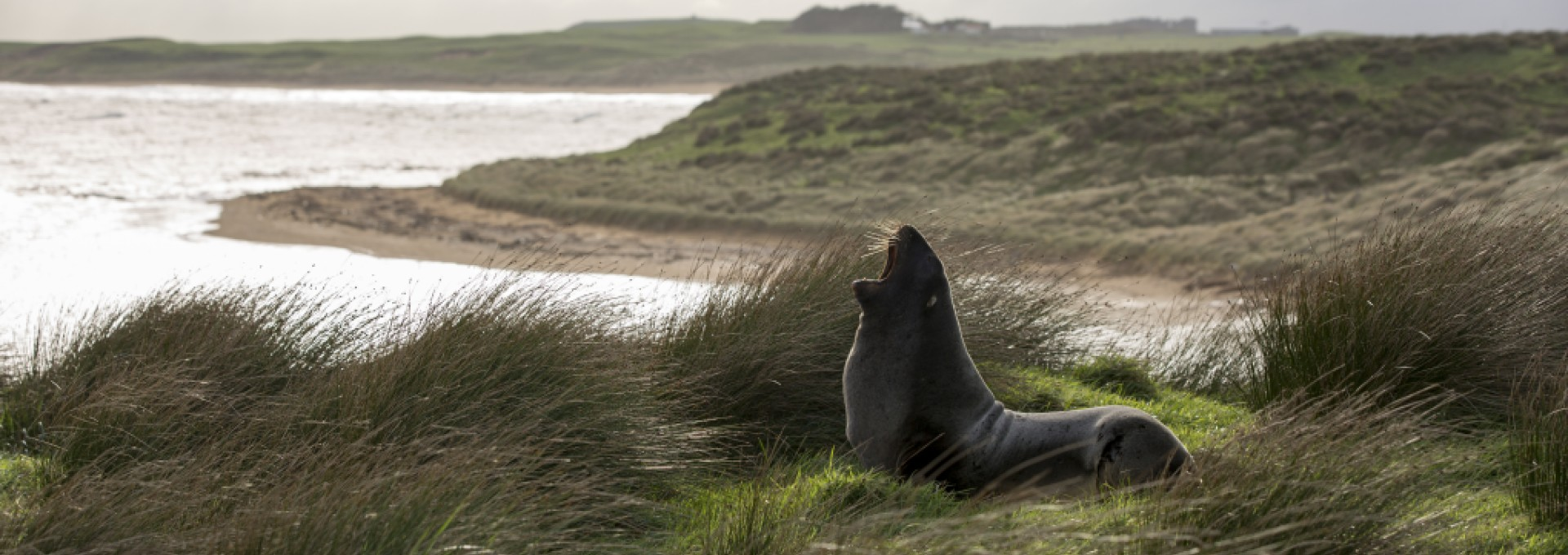 See a range of marine wildlife on The Catlins coast in Southland