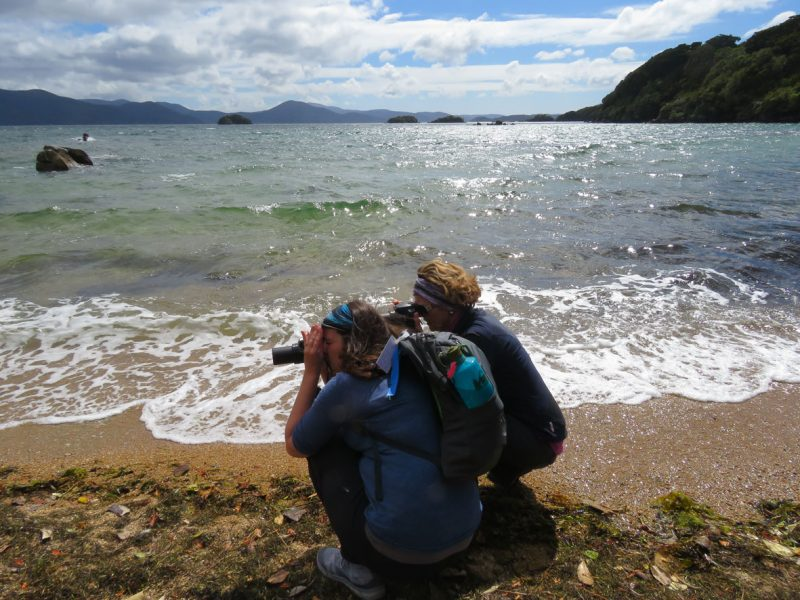 Ulva Island Birds & Forest Guided Walk with Ruggedy Range™