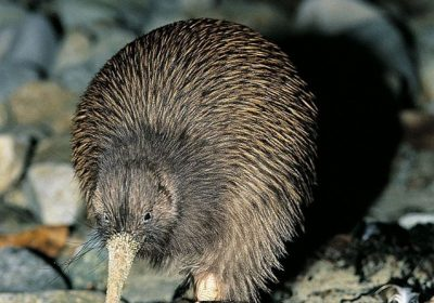 Kiwi Wilderness Walks