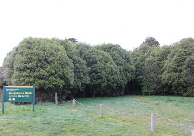 Kingswood Bush Scenic Reserve