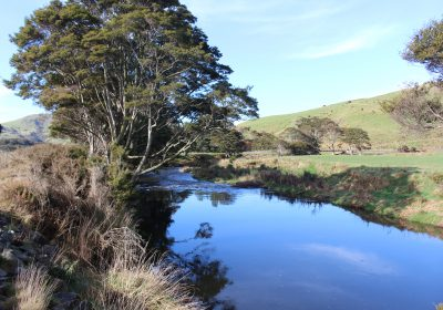 Catlins River-Wisp Loop Track