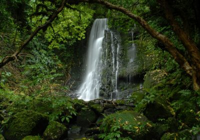 Catlins Mohua Park - Scenic and Wildlife Tours
